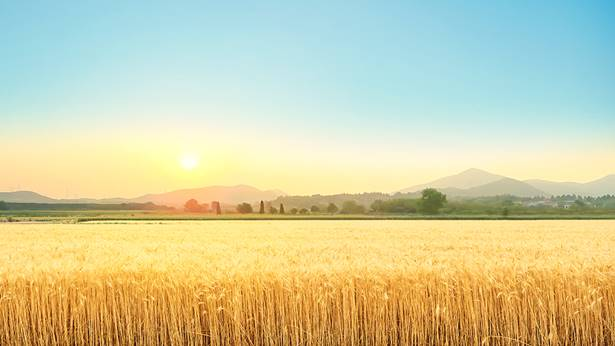 What is the difference between the wheat and the tares?